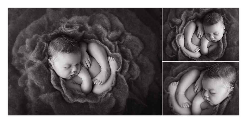 danielle nigido newborn photography